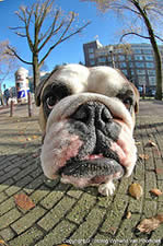 Dog picture from street level with fisheye lens