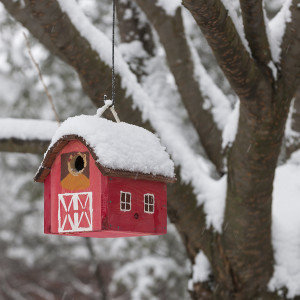 Red bird house hanging outdoors in winter on tree covered with snow